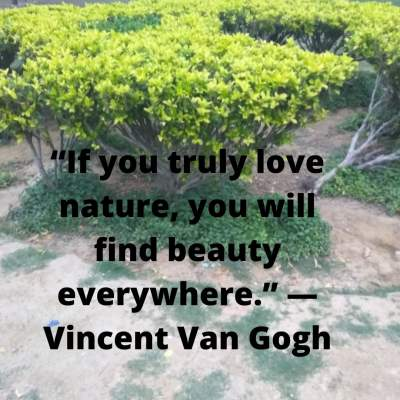 beauty everywhere quotes